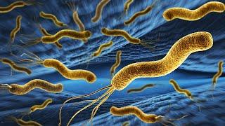 Helicobacter pylori Diagnosis