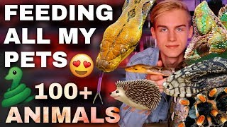 Feeding ALL My Animals in ONE Video! (THIS GOT CRAZY) [🐍, 🦔, 🐸, 🕷, 🐢, 🦎, 🐶, 🐜]