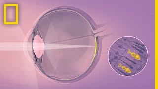 How Your Eyes Make Sense of the World | Decoder