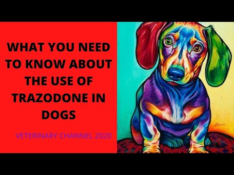 Download Lagu What You Need To Know About The Use Of Trazodone In Dogs.mp3