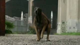 Worst-Case Scenario - Wütender Hund