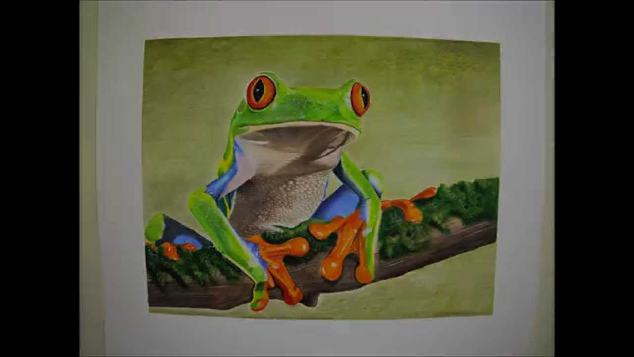 Realistic Tree Frog Drawings Red-Eyed Tree Frog Drawing