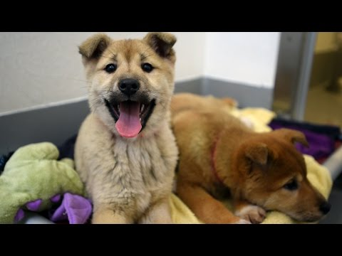 57 Dogs Rescued From South Korea Dog Meat Farm video