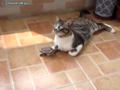 Прикол про черепашку и кота смешное видео 2015