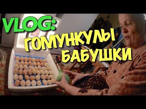 VLOG: ГОМУНКУЛЫ МОЕЙ БАБУШКИ / Андрей Мартыненко