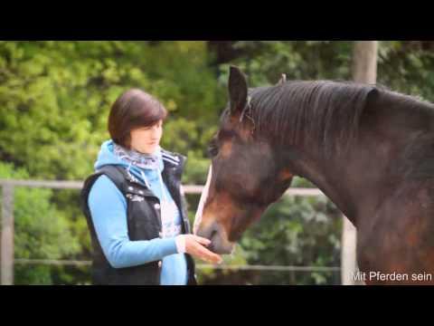 Mit Pferden sein *Kurs 2014*