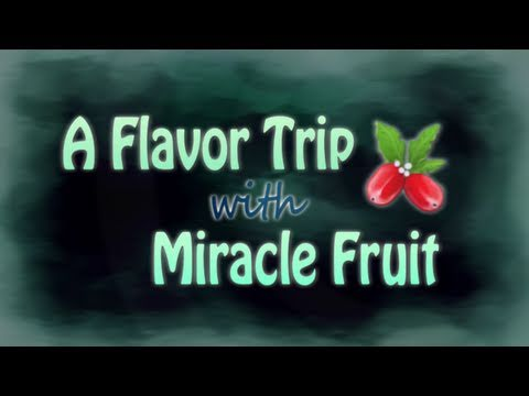 A Flavor Trip With Miracle Fruit. Vol.1