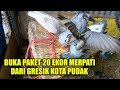 download mp3 dan video #VLOG02 SPESIALL !!! - BUKA PAKET 20 EKOR MERPATI DARI GRESIK ( UNBOXING PIGEON )