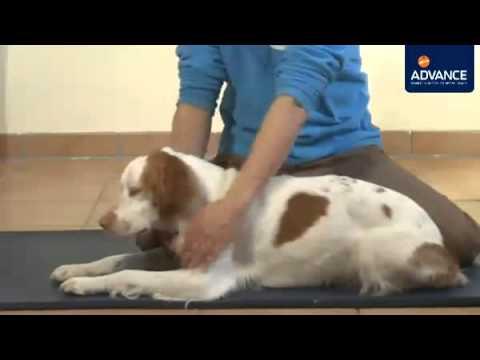 Masaje en perros