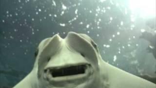 דגים מוזרים