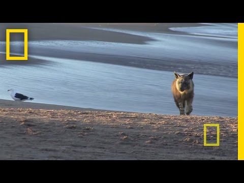 National Geographic Live! - Jewel of Namibia