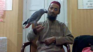Ubaid ur Rehman with African Grey Parrot