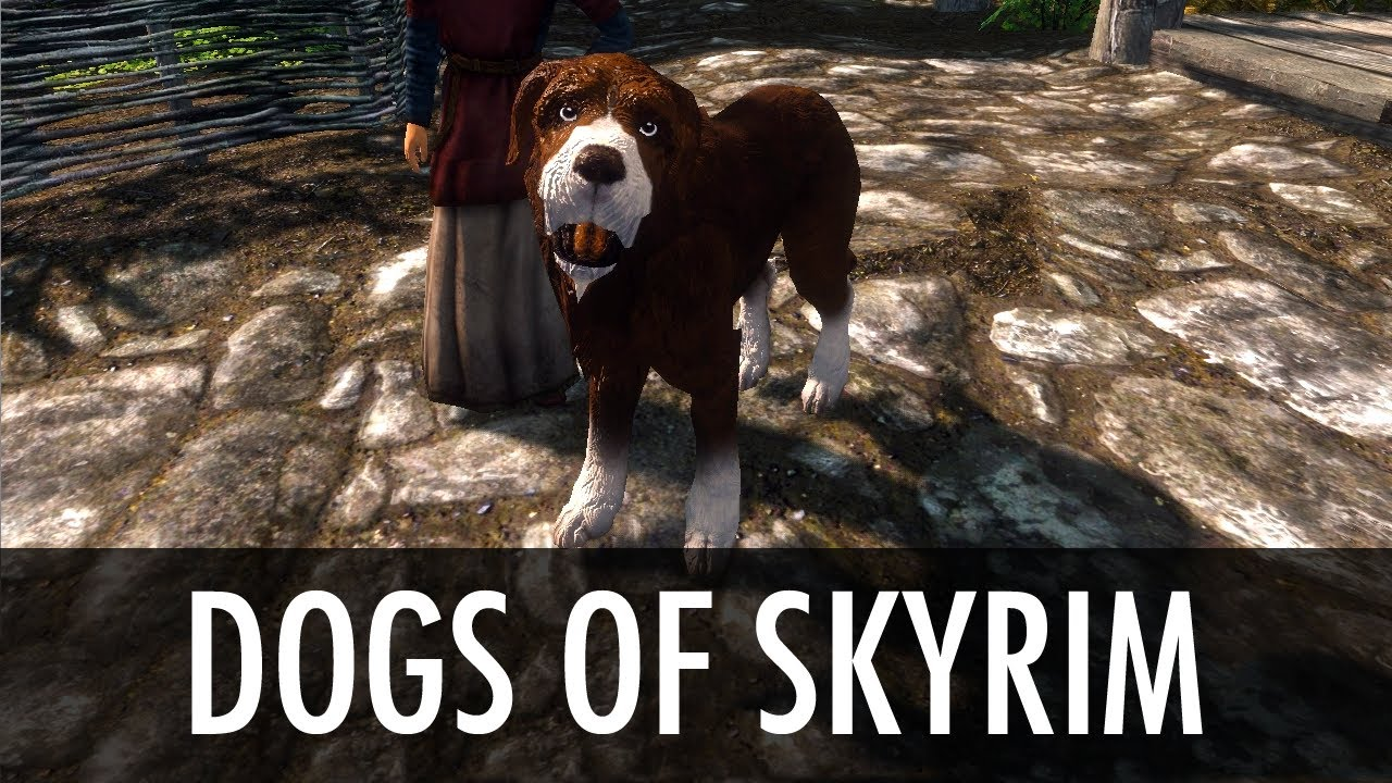 Where Can I Find The Dog In Skyrim