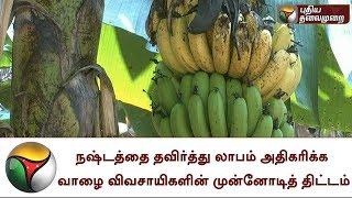 நஷ்டத்தை தவிர்த்து லாபம் அதிகரிக்க வாழை விவசாயிகளின் முன்னோடித் திட்டம்   Banana, Farmers