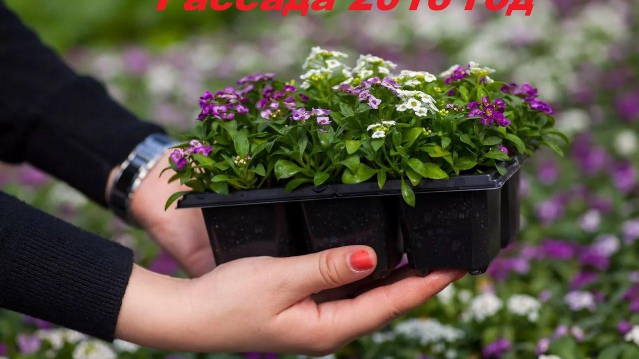 Реклама рассады цветов 5