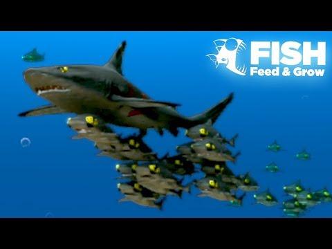 THE GIANT SHARK SHOAL!! - Fish Feed Grow | 21