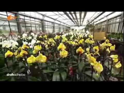 orchideen videolike. Black Bedroom Furniture Sets. Home Design Ideas