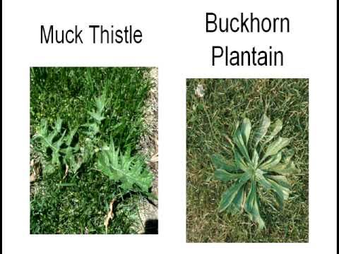 Weeds in your Lawn, Garden and Landscape