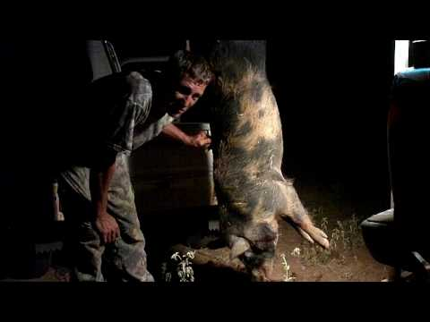 Hunting Texas Wild Boar on the LoneStarCreekRanch: Head Shots...