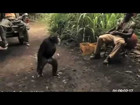 Monkey With Ak-47 Full Video video