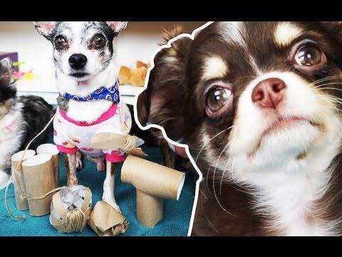 DIY Игровая для собаки и кошки из туалетной бумаги, щенок играет, дрессировка собаки Magic Family