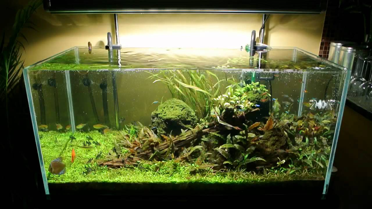All Pond Solutions Open Top Aquarium Fish Tank 7wks - YouTube