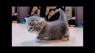 Funny crazy cat videos Compilation 2019