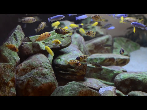 600L Malawi Cichlids Sump Filtration Overview