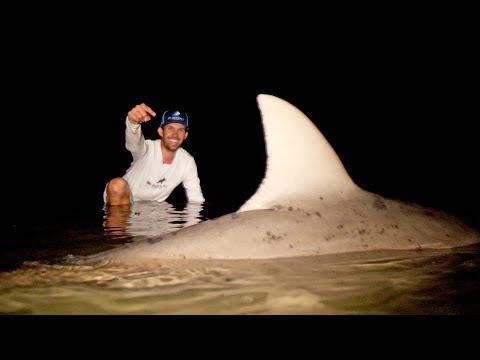 MONSTER Shark Caught in a RIVER
