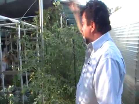 Watch How To Build A Hydroponic System   Hydroponic System