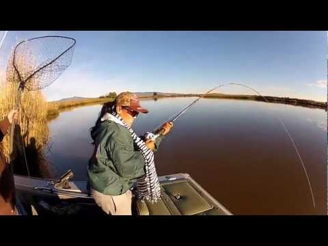 STURGEON FISHING, SUISUN CITY, CA