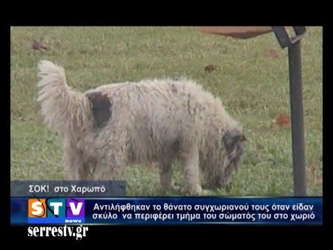 Είδαν σκύλο να περιφέρει τμήμα του σώματός