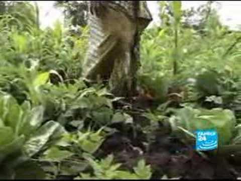 The rape of Kivu-Report-En-France24