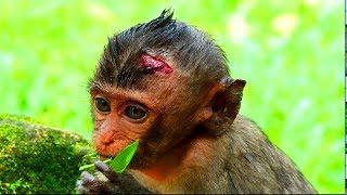 Million Danger On Lori ! Very worry about safety of lori , Big injure on lori head , Look so sad