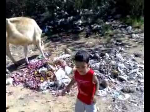Baby Call Cow To Play With Him Oriya odia video