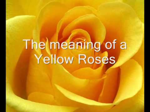 Yellow Roses Video
