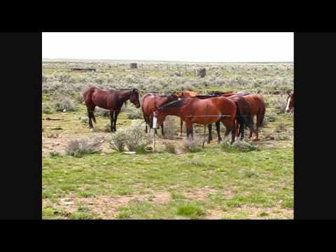 Oregon Ranch Horses Video