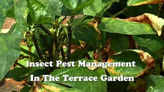 Insect Pest Management in the Terrace Garden