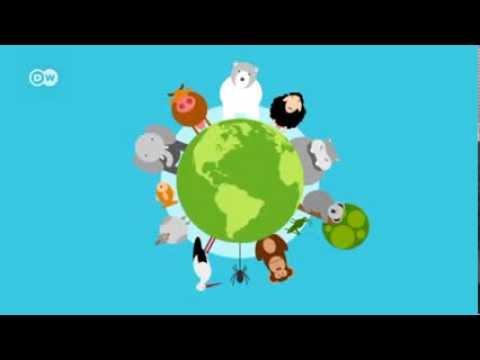 Wie Wirkt Sich Der Klimawandel Auf Tiere Aus? | Global Ideas
