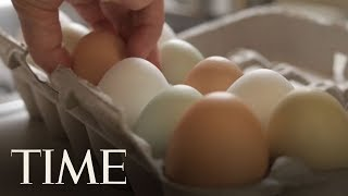 More Than 200 Million Eggs Recalled Over Salmonella Outbreak   TIME