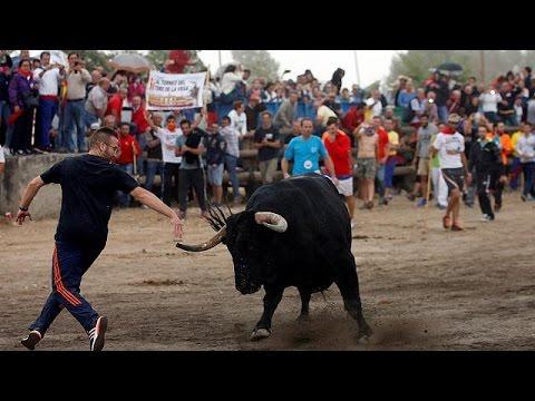 Впервые за 500 лет: бык остался в живых на фестивале Торо де ла Вега