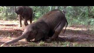 Chết cười với động vật bị xỉn do ăn trái Marula - Boyplay - Windowsz.net