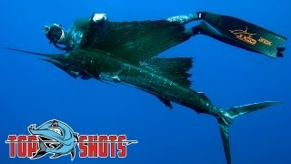 Top Shots Spearfishing News -  Gulf Grouper and Madagascan Sailfish