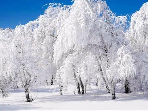 Народные и застольные песни - Снег кружится