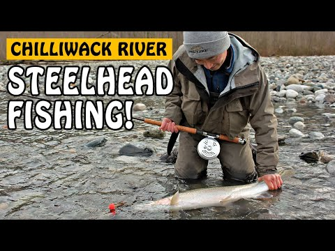 Fishing with Rod: Vedder Spring Steelhead