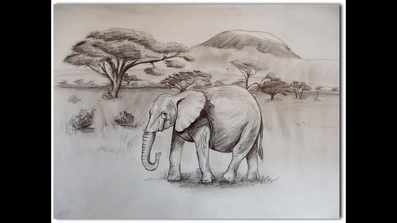 Speed Drawing Elefant - YouTube