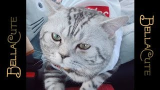Weird Cats and Cutest Kitten Videos Ever 💓 Most Funny Cats January 2019 💓 #P1