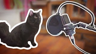I Wrote A Theme Song For My Cats