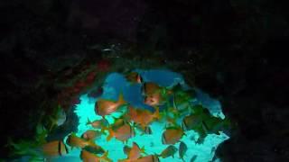 Scuba diving in Cancun VR