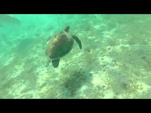 Snorkeling with Sea Turtles - Barcelo Maya Palace, Riviera Maya, Mexico